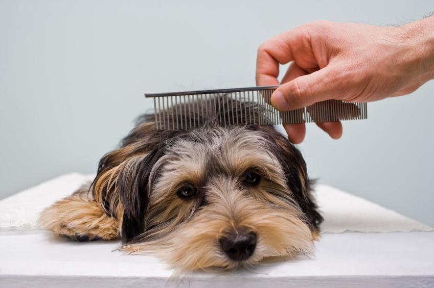 quitar enredos a tu perro