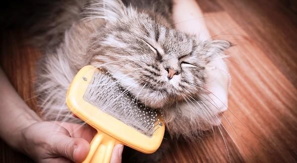 quitar nudos del pelo de tu gato