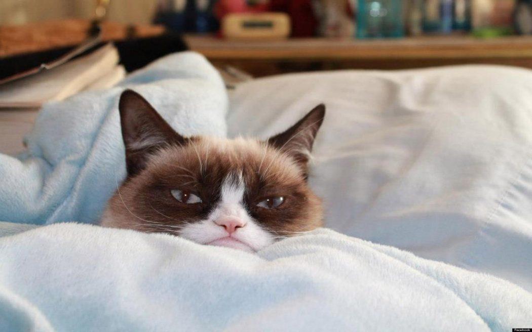 http://www.actualidadmascotas.com/wp-content/uploads/2015/03/6911871-grumpy-cat-no-wallpaper.jpg