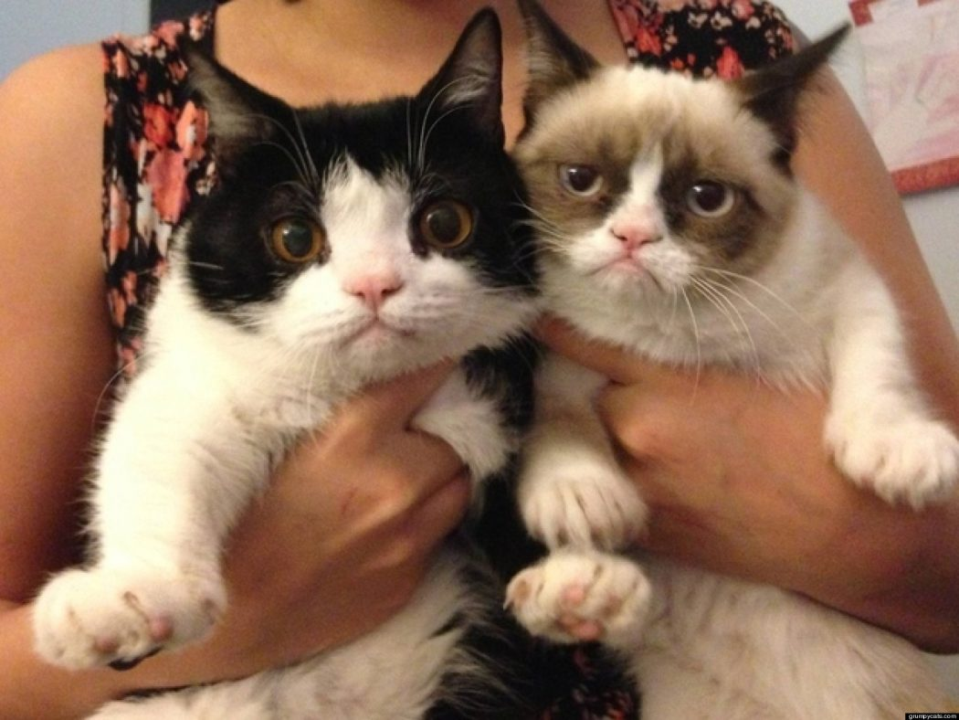 grumpy cat and pokey