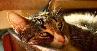 refugio gatos