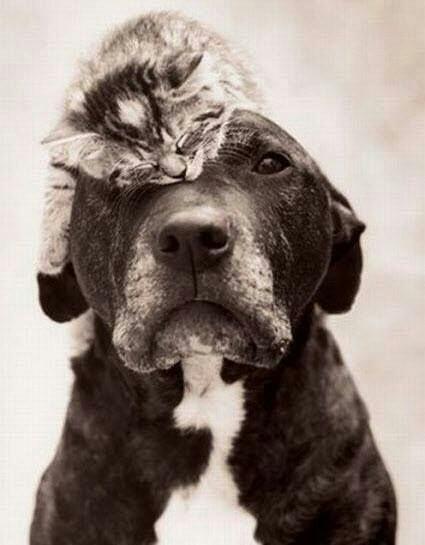gatos enfadando a perros