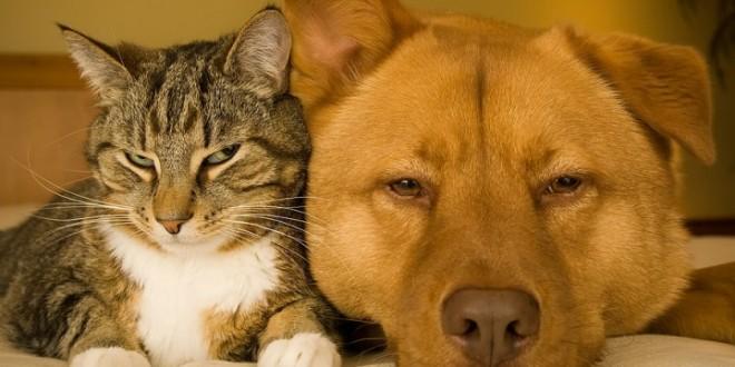 gato enfadando a perros