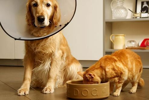 gatos robando comida a perros