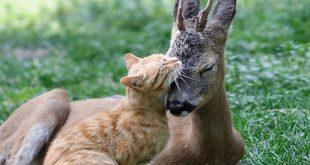 gatos con otros animales