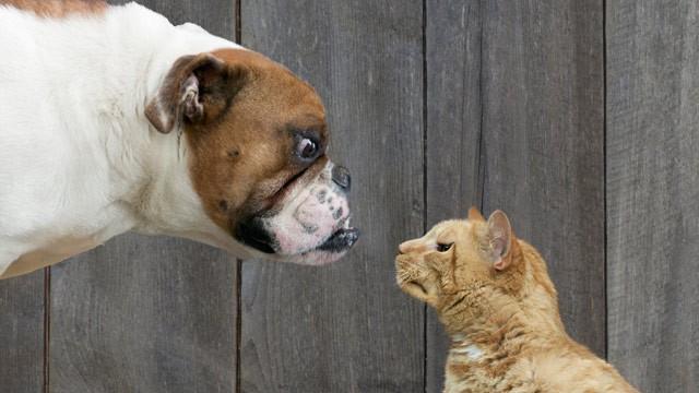 gato enfadando a perro