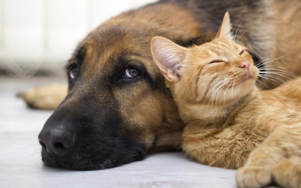 poemas perros y gatos