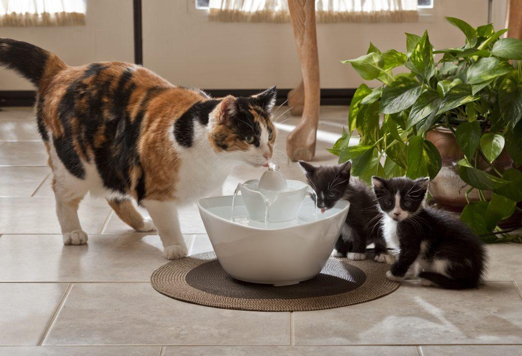 gatos bebiendo en fuente