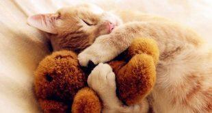 gato abrazando peluches