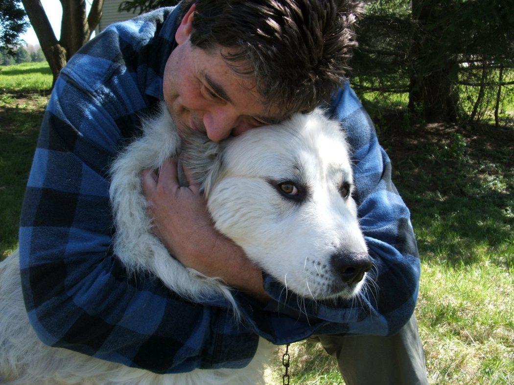 artrosis y cuidados perro