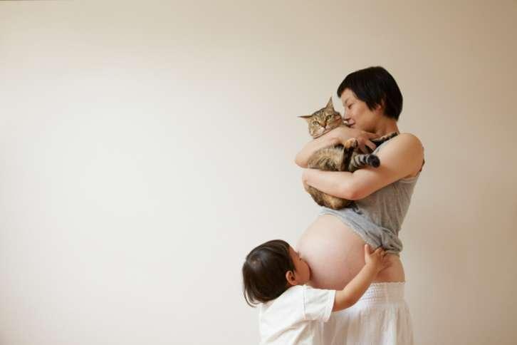 toxoplasmosis felina y embarazo