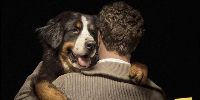 anuncios con perros