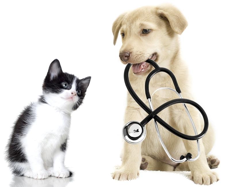 veterinario descuentos