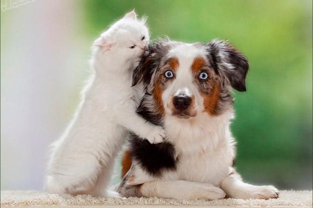 los mejores v deos de encuentros entre perros y gatos