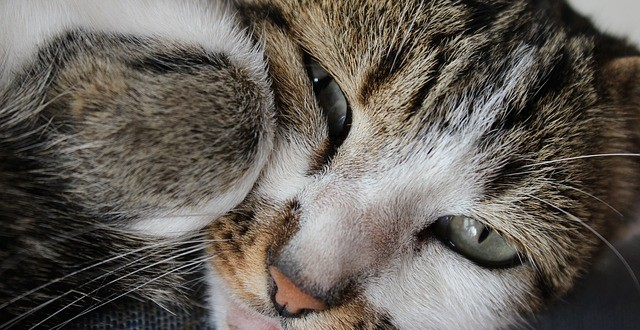 gatos con sueño