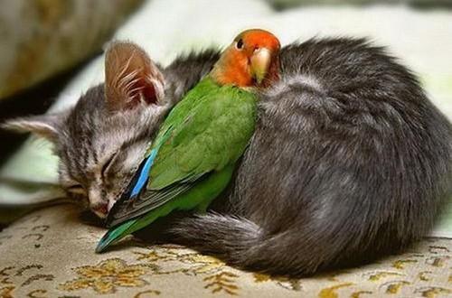gatos y pájaros