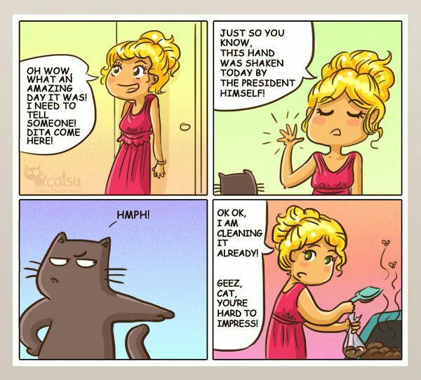 gato y bandeja de arena