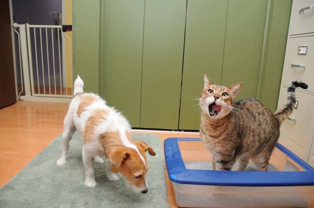 gato y arenero