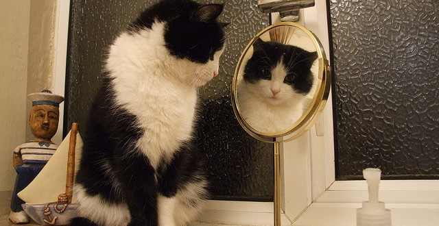gato y espejo