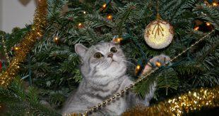 gato y navidad
