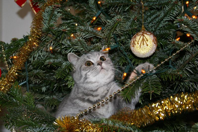 Los mejores v deos de gatos y rboles de navidad - Los mejores arboles de navidad ...