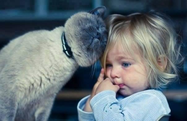 gatos, perros y bebés