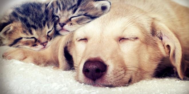 gatos y perros durmiendo