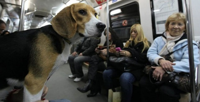 perros metro madrid