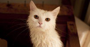 gato-baño