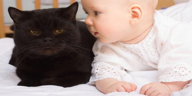 gatos y bebés.