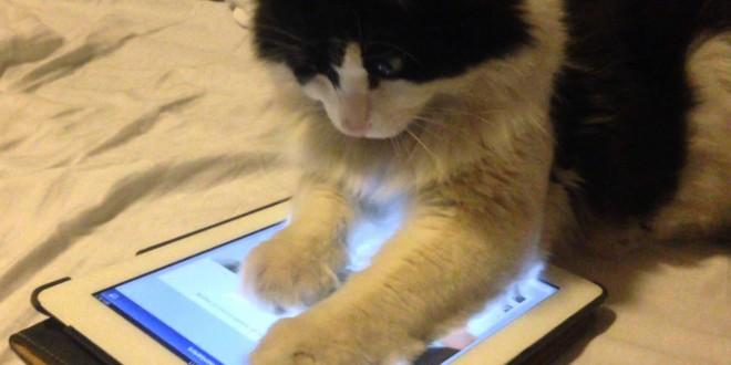 gato y tablet