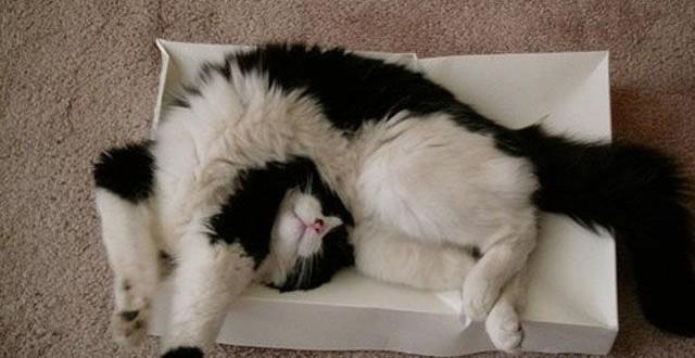 gatos durmiendo en sitios raros