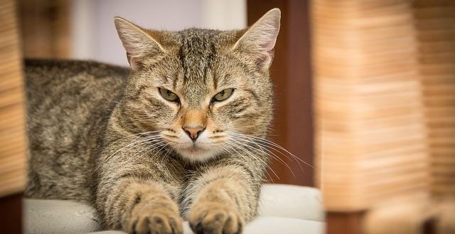 gifs de gatos