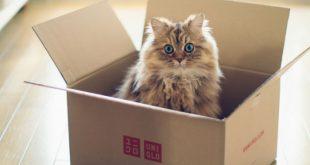gifs de gatos con cajas