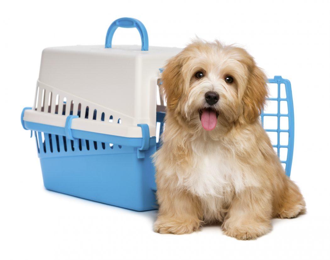 transportin para tu perro