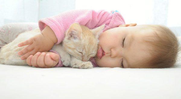 Convivencia gatos bebés
