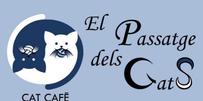 cat café de Valencia