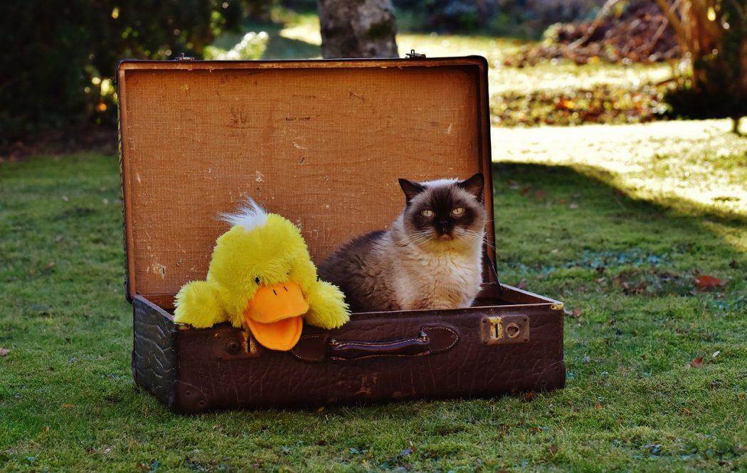 consejos para refrescar a tu gato este verano