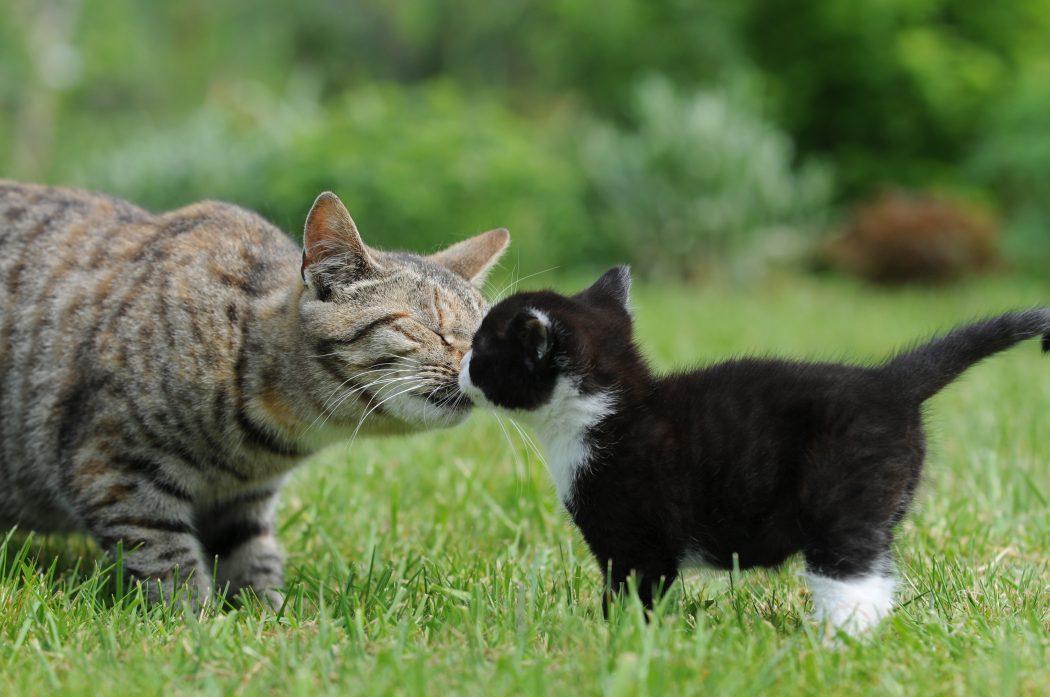 peleas entre gatos