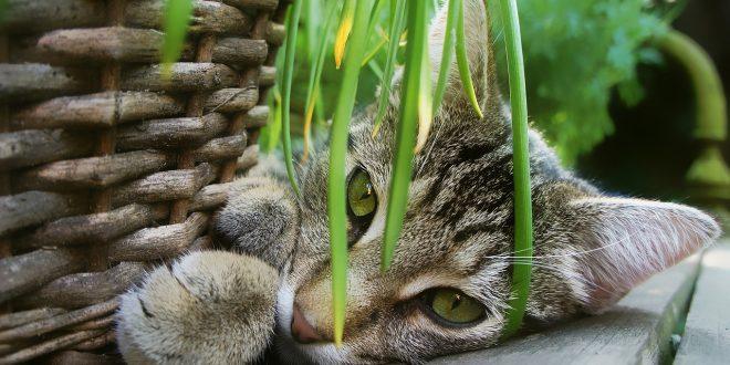 esterilizar-a-un-gato