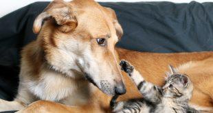 Adoptar un animal de compañía