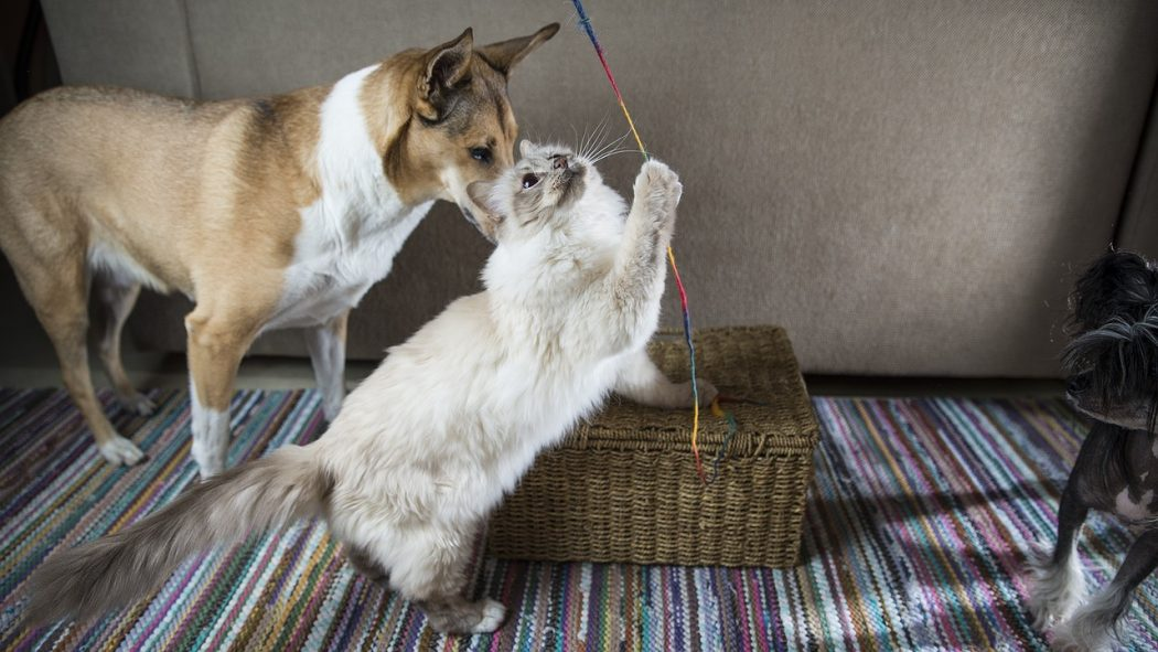 adoptar-animal-de-compañía