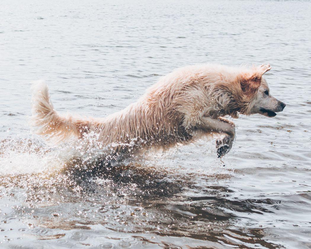 agua-del-mar-para-tu-perro