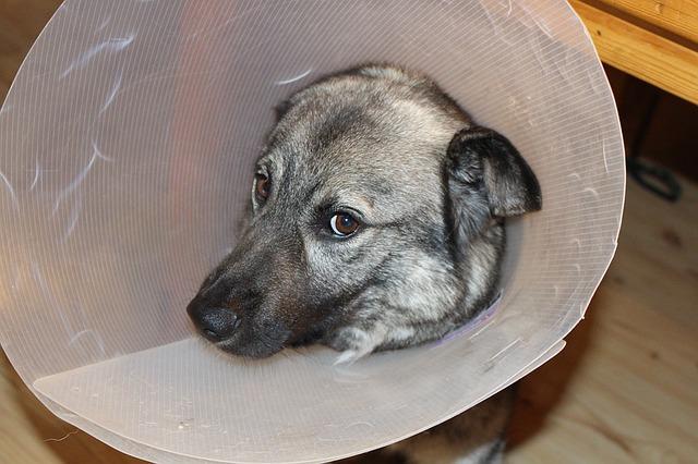 elegir-veterinario2