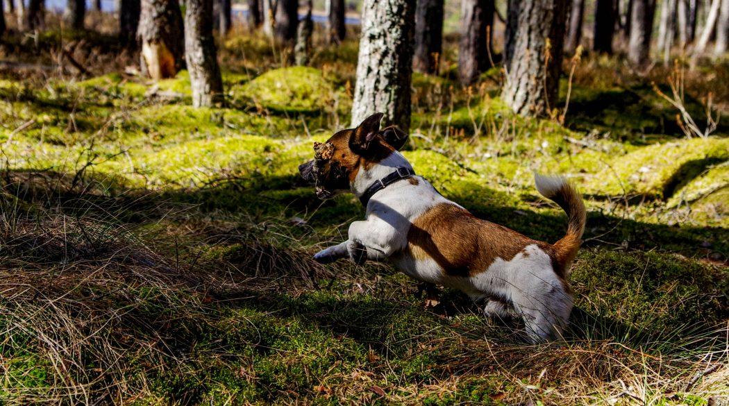 ejercicio-con-tu-perro