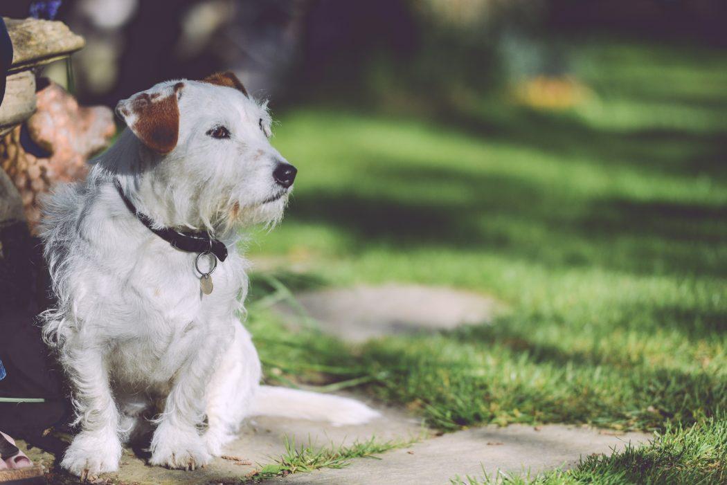 paseador-de-perros