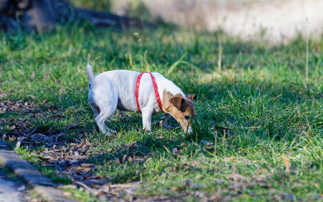pasear-con-tu-perro