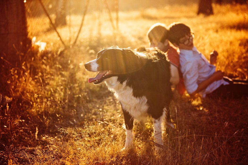 tomar-el-sol-con-tu-perro