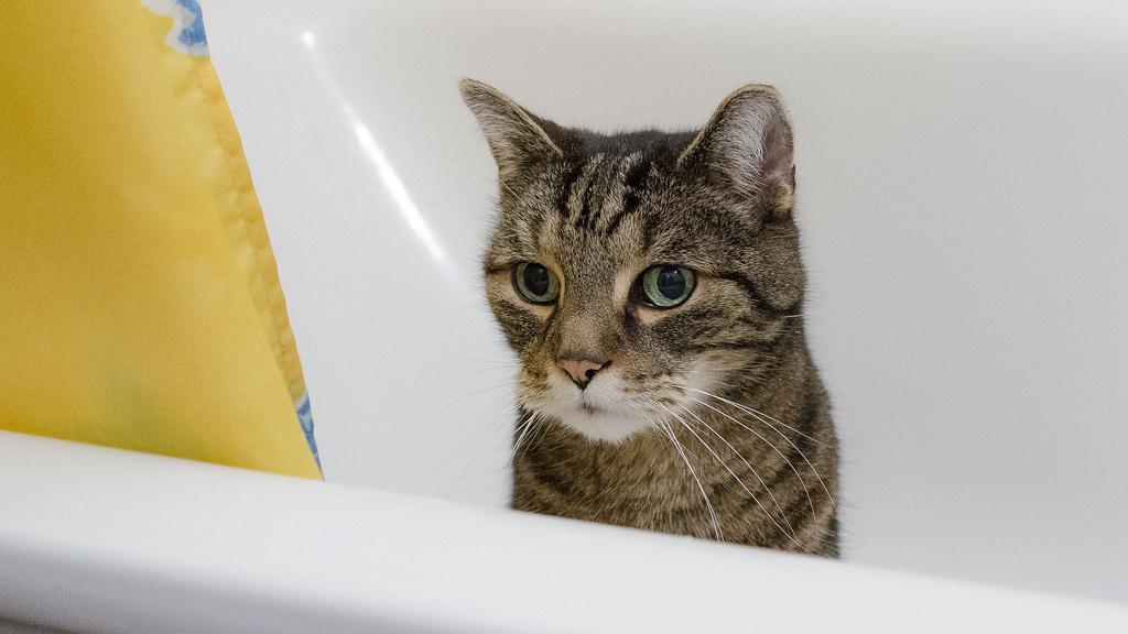 tratamiento parasitos en gatos