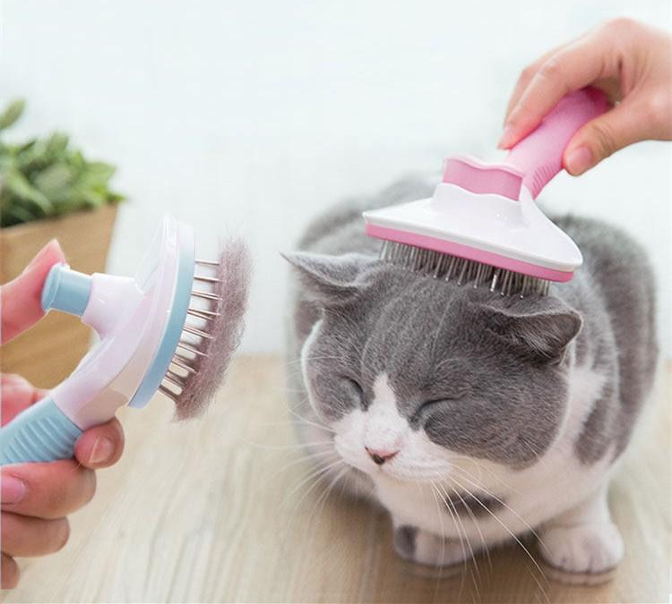 tratamiento piojos en gatos